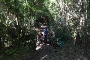 Parque nacional da Serra da Bocaina